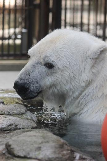 動物園の魅力_e0272869_19211911.jpg