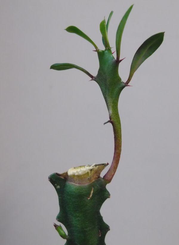 ようやく下り坂 (今日は植物の進化のお話)_c0025115_18294052.jpg