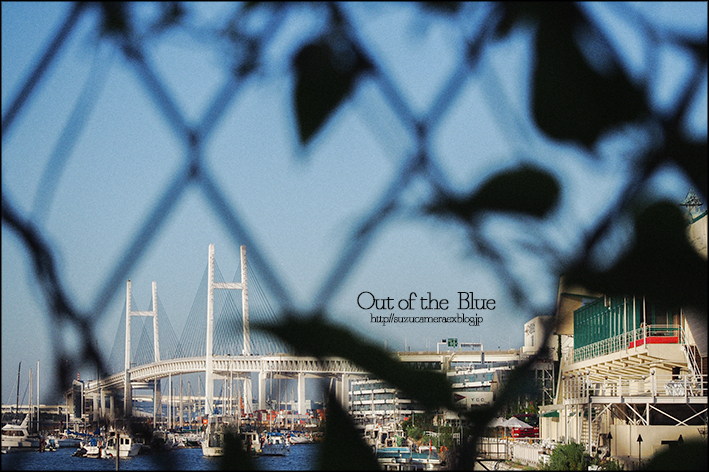 Out of the Blue_f0100215_2159090.jpg