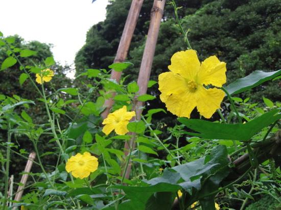 「葛の花」の季節です。_a0125419_07410964.jpg
