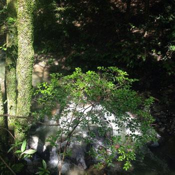 お休み日記 - waterfall_c0168222_19451579.jpg