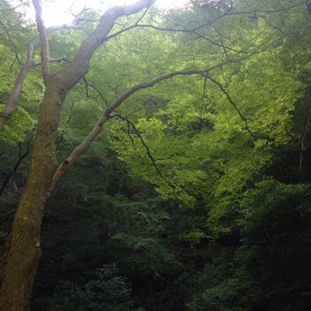 お休み日記 - waterfall_c0168222_2083834.jpg