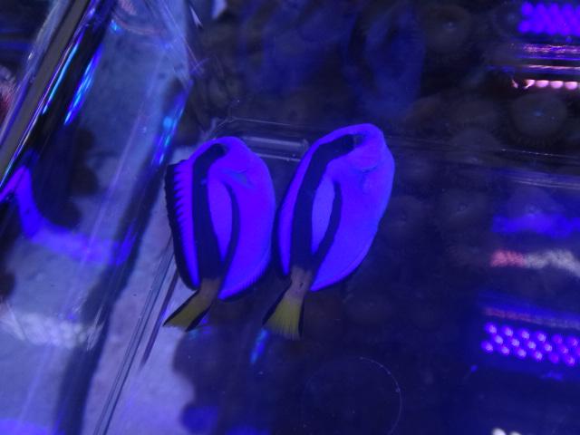 140903 海水魚・水草・淡水魚・金魚_f0189122_12335592.jpg