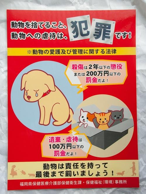 捨て猫、捨て犬は犯罪です。_d0073743_2050125.jpg