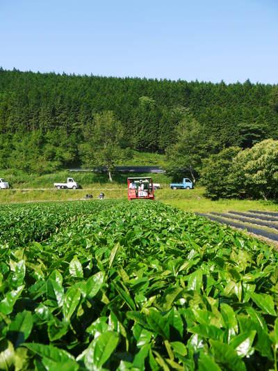 利平栗 栗の王様「利平栗」 完全無農薬・完全無化学肥料で虫食いの葉っぱで順調に育ってますよ!_a0254656_17144762.jpg