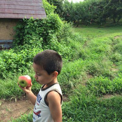 りんご_b0061491_21301521.jpg