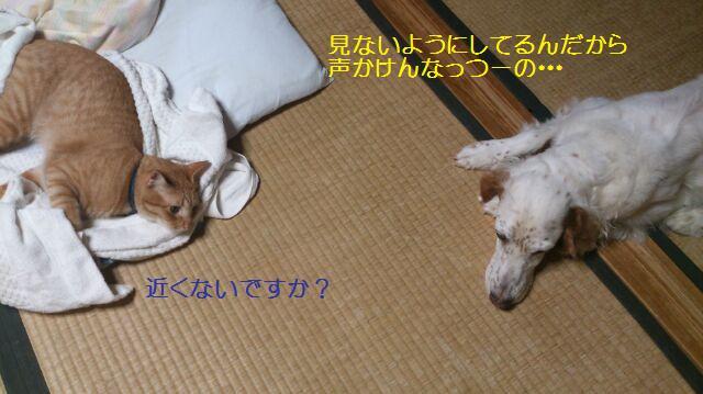 b0113725_1651341.jpg
