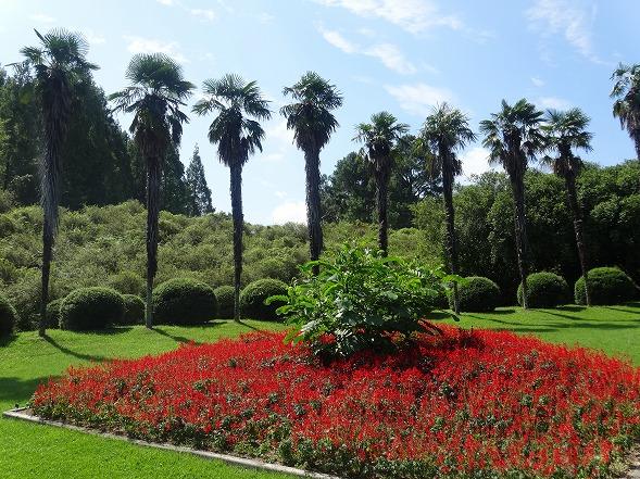 私市植物園の花 ①_b0299042_14182776.jpg