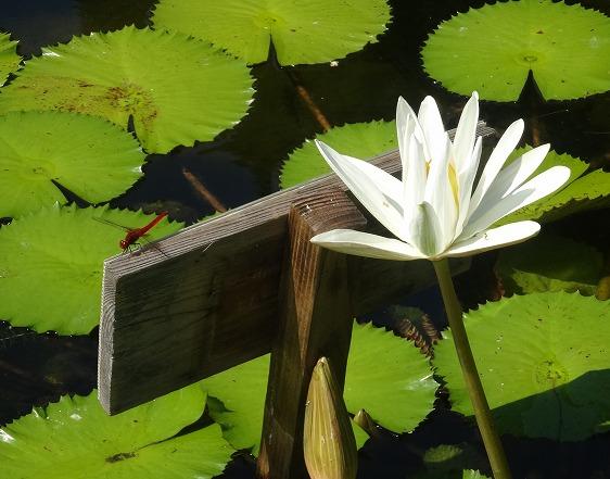 私市植物園の花 ①_b0299042_14201515.jpg