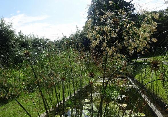 私市植物園の花 ①_b0299042_14203221.jpg