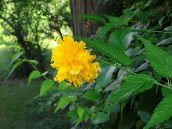 私市植物園の花 ①_b0299042_14213358.jpg