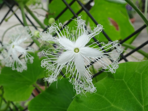 私市植物園の花 ①_b0299042_14214776.jpg