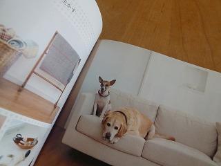 Labrador Retriver  盲導犬のこと_a0165160_06091751.jpg