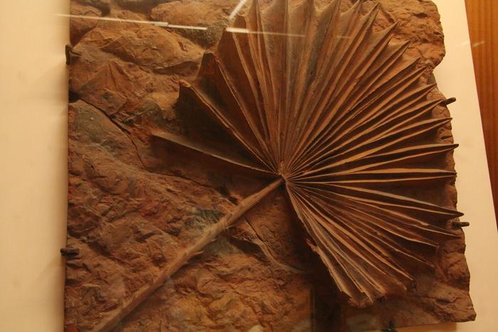 サグラダファミリア地下博物館_c0100195_937712.jpg