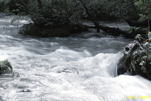 水という命、樹という命、光という命_a0158797_23344470.jpg