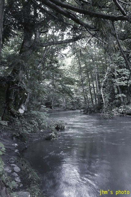 水という命、樹という命、光という命_a0158797_23374882.jpg