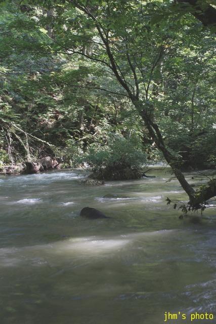 水という命、樹という命、光という命_a0158797_2347299.jpg
