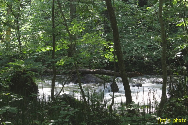 水という命、樹という命、光という命_a0158797_23525838.jpg