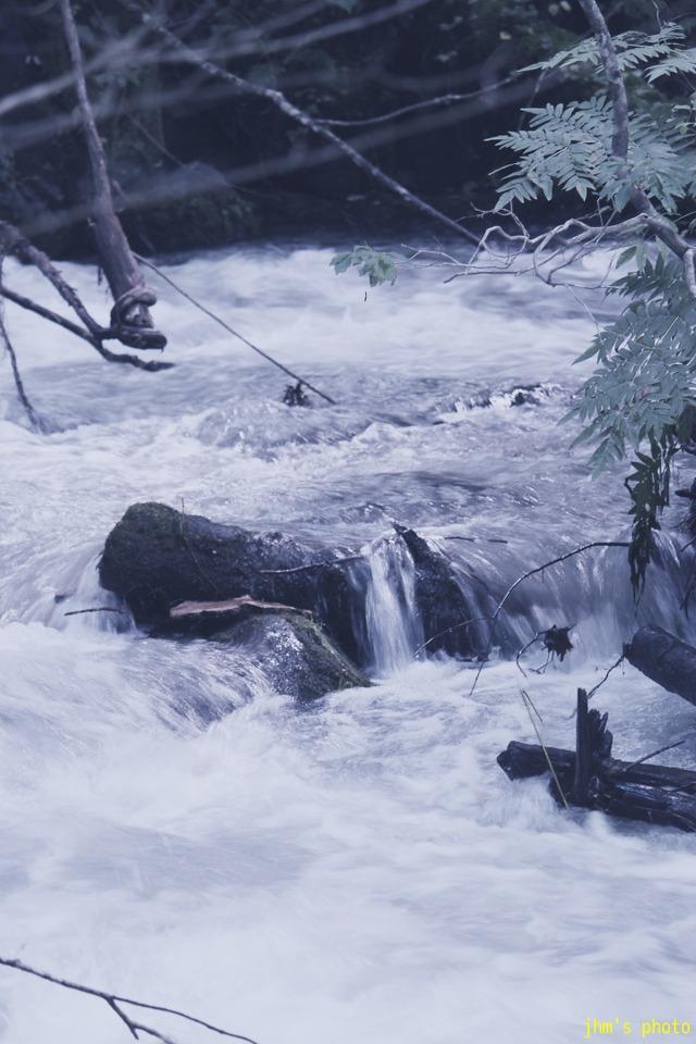 水という命、樹という命、光という命_a0158797_23552320.jpg