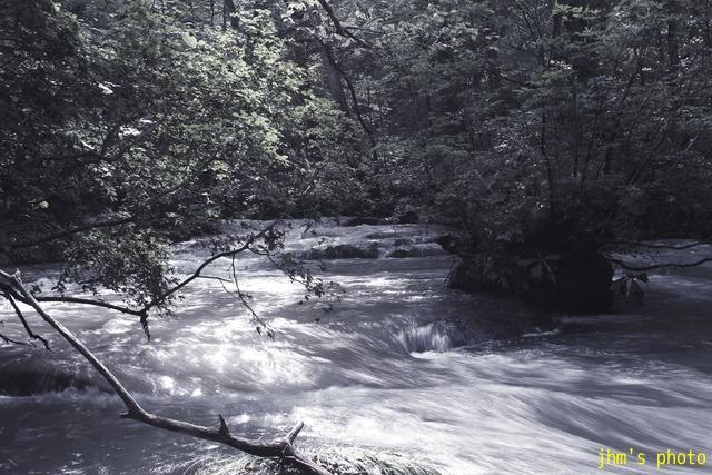 水という命、樹という命、光という命_a0158797_23593262.jpg