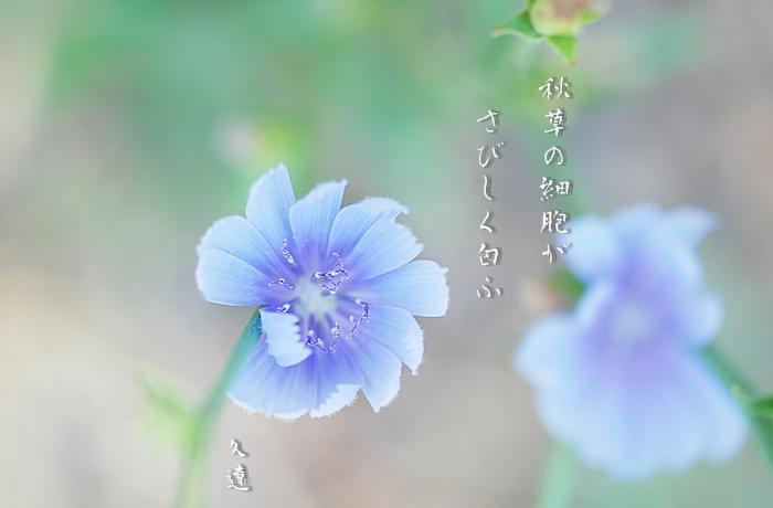 f0053297_1448431.jpg