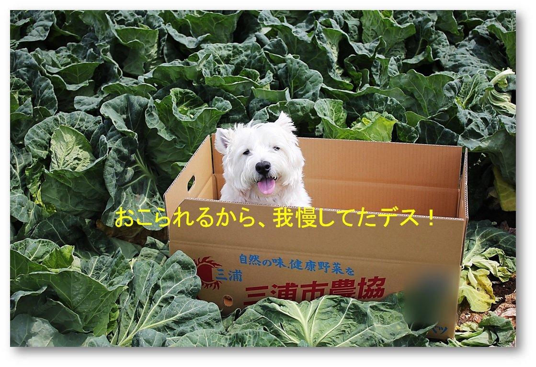 ☆ キャベツを丸ごと食べるクーチャン ☆_a0161111_23365668.jpg