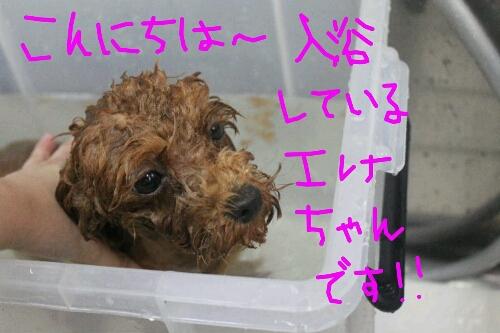 肉球クリーム_b0130018_1949393.jpg