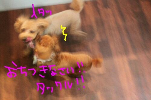 肉球クリーム_b0130018_19515092.jpg