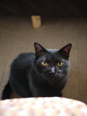 猫のお友だち ポーくん編。_a0143140_18424126.jpg