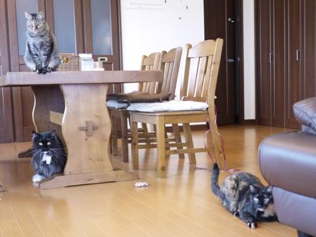 猫のお友だち ワサビちゃん天ちゃんう京くん編。_a0143140_19284418.jpg