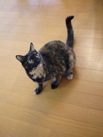 猫のお友だち ワサビちゃん天ちゃんう京くん編。_a0143140_19301275.jpg