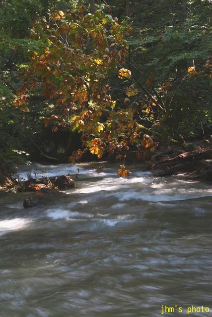 水という命、樹という命、光という命_a0158797_033833.jpg