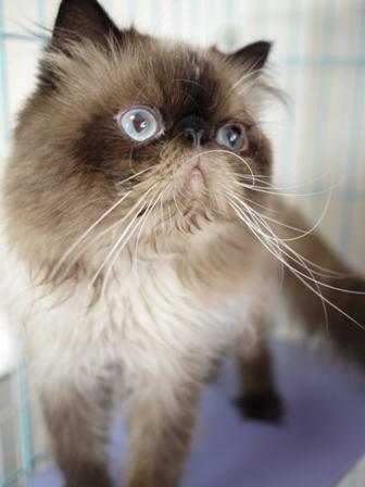 猫のお友だち ターボくん伽羅くんデンくん柊くん + うさぎのお友だち ファジーちゃん編。_a0143140_1372680.jpg