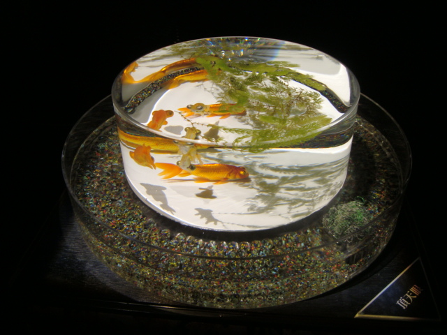 「アートアクアリウム 2014 江戸金魚の涼」へ行く。_f0232060_16145031.jpg