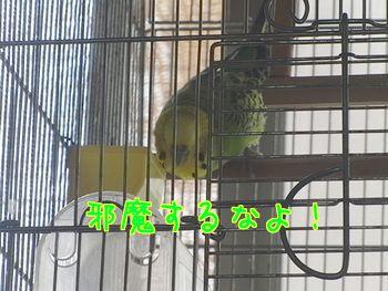 f0196665_2035184.jpg