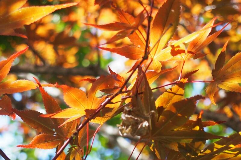 八郎沼公園_b0106766_2221940.jpg