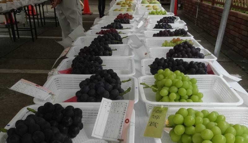 果物まつりとナシ・ブドウ品評会_f0059673_21355121.jpg