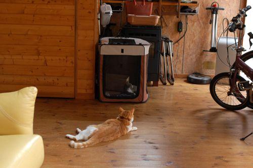 子猫が来たりて...._e0091778_203436.jpg