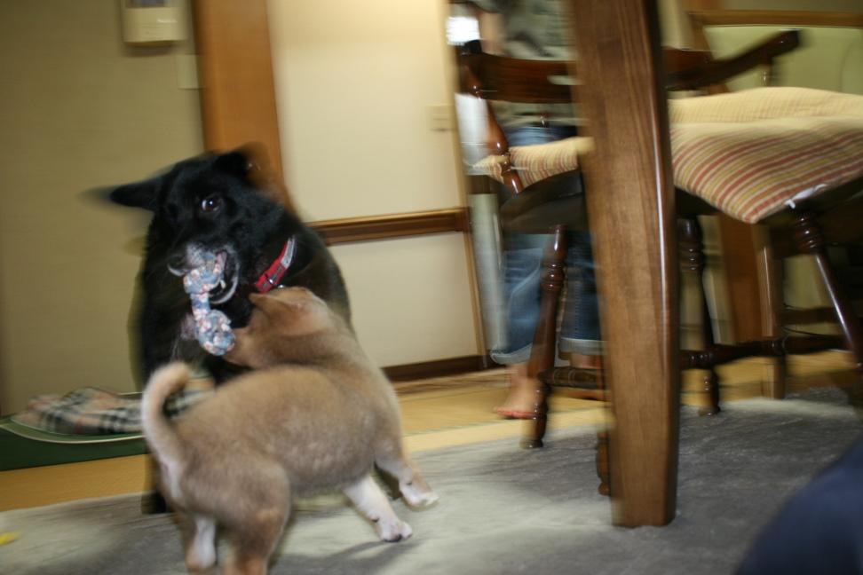 レア&キアヌ&マウ 新生活スタート!_f0242002_239760.jpg