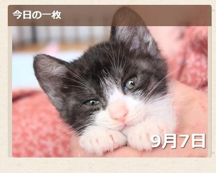 Yahoo!ペット今日の一枚猫 こゅき編。_a0143140_2201865.jpg
