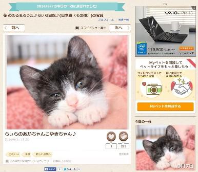 Yahoo!ペット今日の一枚猫 こゅき編。_a0143140_2203931.jpg