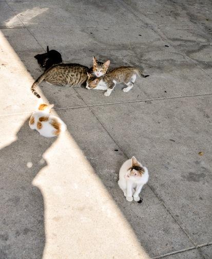 港近くに、子猫4、母1_d0073743_12593680.jpg