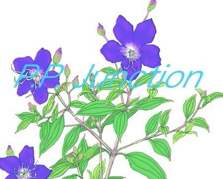 d0142773_23364204.jpg