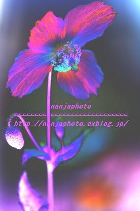 e0268999_7494877.jpg