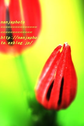 e0268999_751322.jpg