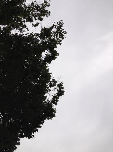 秋の朝のはじめに_a0267845_17365839.jpg