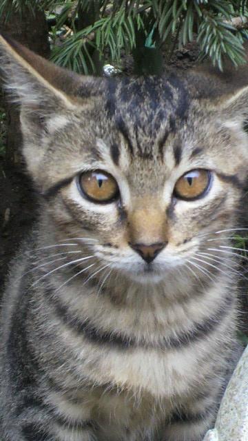 仔猫ちゃんの里親さん見つかりましたっm(_ _)m_b0051666_1659199.jpg