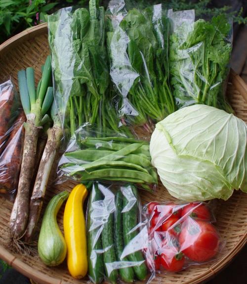 今週の野菜セット(9/9~9/13着)_c0110869_14181151.jpg