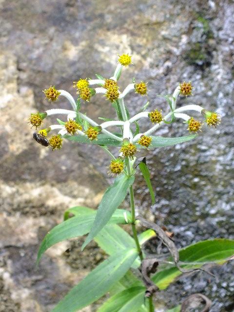 9月5日 吹割の滝付近の植物観察_e0145782_121357.jpg
