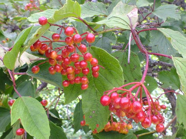 9月5日 戦場ケ原の植物観察_e0145782_1456485.jpg